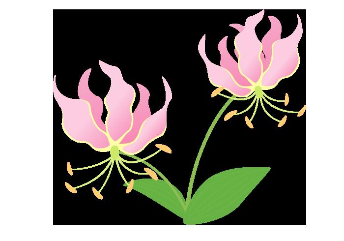 グロリオサの花 無料のフリーイラスト素材集