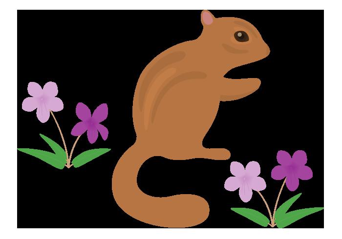 リス(栗鼠)