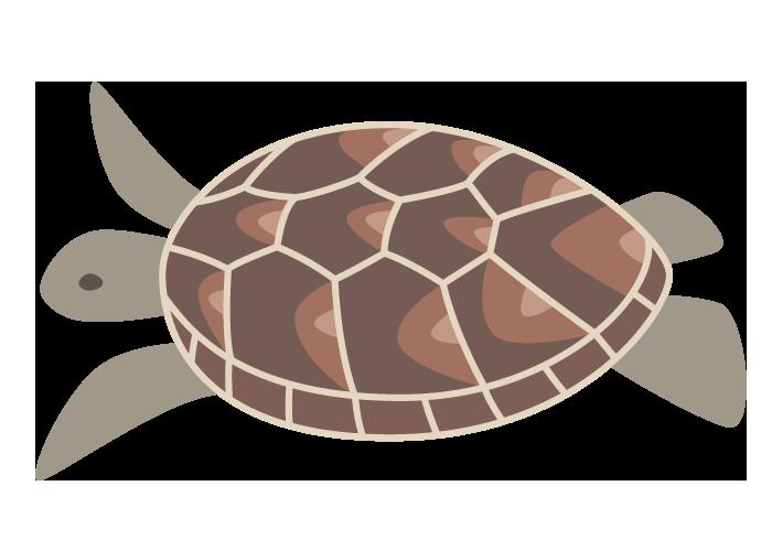 カメ(亀)