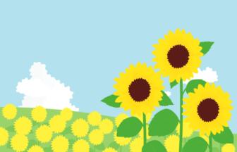 夏の風景(ヒマワリ畑)