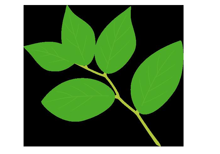 葉っぱ 無料のフリーイラスト素材集
