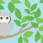 木の上のフクロウ