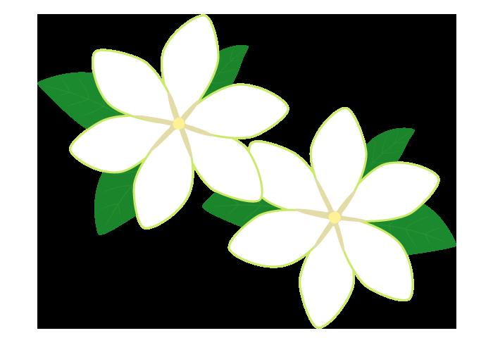 クチナシ(梔子)