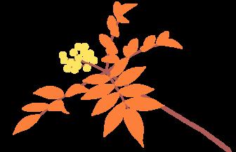 ナナカマド(七竈)